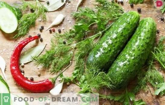 Kaip virti sūdytus agurkus? Sūdytų agurkų su ąžuolo žieve, krienais, citrina, mėtų, actu ir duona variantai