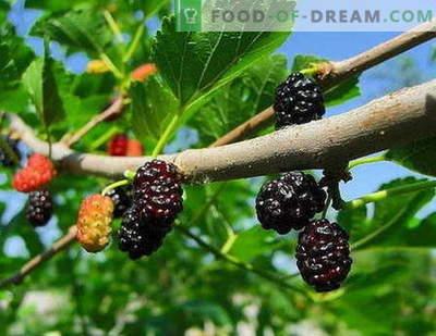 Mulberry jam: kaip tinkamai virti