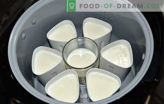 Jogurtas stiklainiuose puodelyje yra sveikas skanus delikatesas. Jogurto veislės iš daugiakanalio stiklainiuose