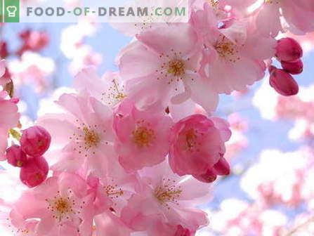 Sakura uogienė: kaip virėjas