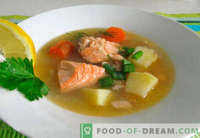 Sopa de salmón - las mejores recetas. Cómo cocinar correctamente y sabrosa la sopa de salmón.