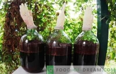 Naminis vynuogių vynas su pirštine - išeitis! Technologija naminių vynuogių vyno gamybai su pirštine