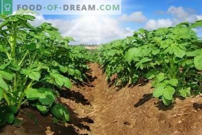 """""""Lazurite"""" - patikima ir saugi bulvių iš piktžolių apsauga"""