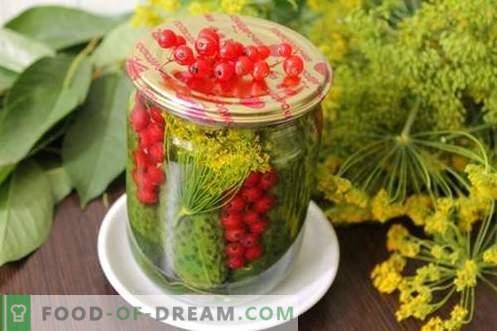 Marinuoti agurkai su raudonais serbentais - visos vasaros spalvos gali būti