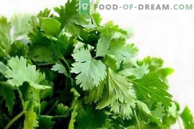 Kaip laikyti cilantro